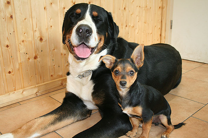 Preise Hundehotel
